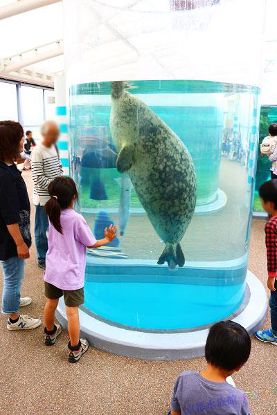 京都水族館のかいじゅうゾーン