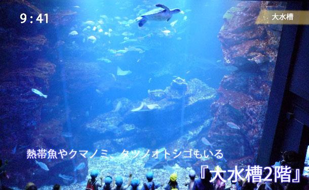 京都水族館の大水槽を2階から見た様子