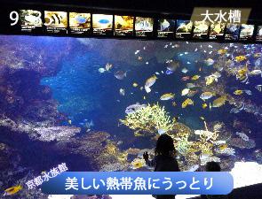 美しい熱帯魚にうっとり