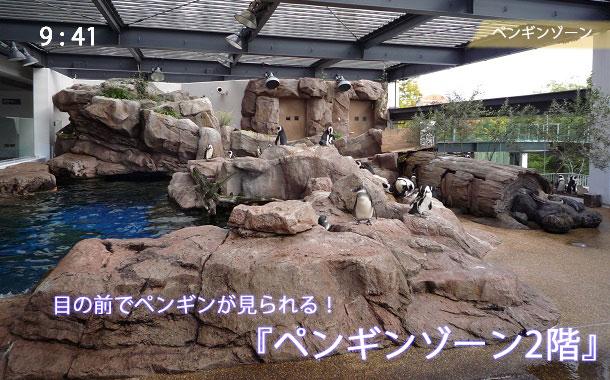 京都水族館のペンギンゾーン2階