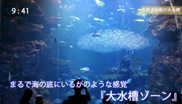京都水族館の大水槽を1階から見た様子