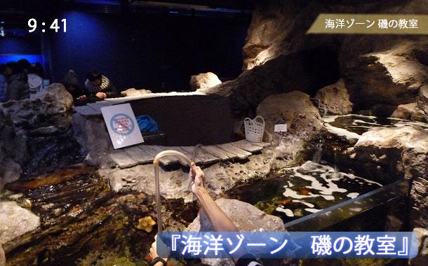 京都水族館の磯の教室