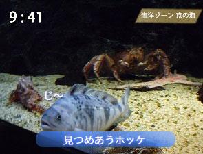 京都水族館の深場水槽