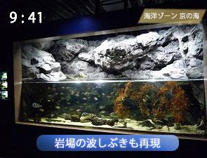 京都水族館の荒磯水槽