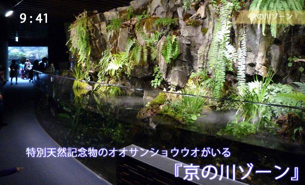 京都水族館の京の川ゾーン