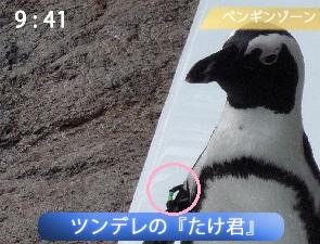 ペンギンペタペタタイム