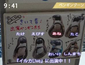 イルカLiveに出演しているペンギンたち