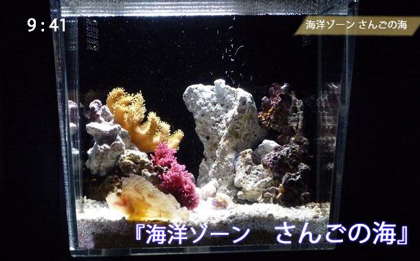 京都水族館のサンゴ