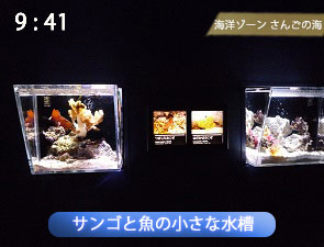 サンゴの魚の小さな水槽