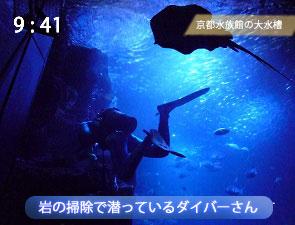 大水槽に潜って掃除するダイバー