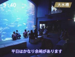 京都水族館の大水槽の混雑(平日)