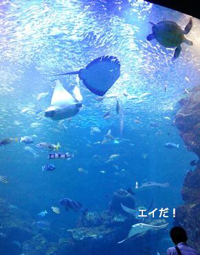 京都水族館の大水槽(1階から)