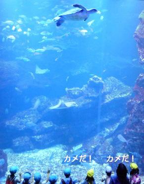 京都水族館の大水槽(2階から)
