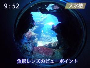 大水槽の魚眼レンズ型ビューポイント