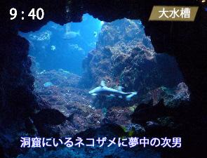 大水槽の洞窟型ビューポイント
