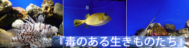 京都水族館の擬態する生きものたち