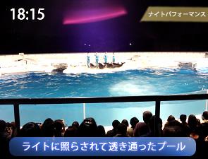 京都水族館のイルカ・ナイトパフォーマンス