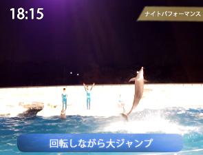 イルカの回転大ジャンプ