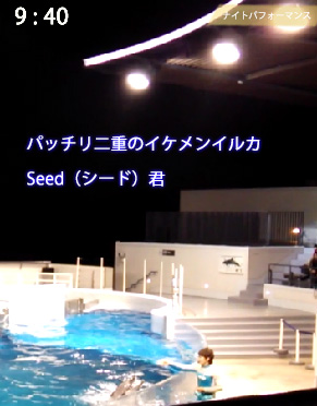 京都水族館のイルカ、シード君
