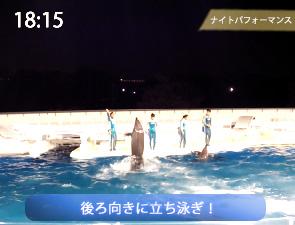 イルカの立ち泳ぎー