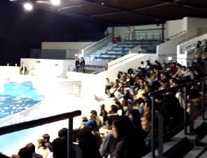 京都水族館のナイトイルカショーの混み具合