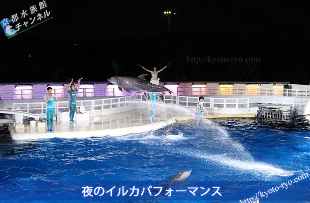 イルカ ショー 京都 水族館