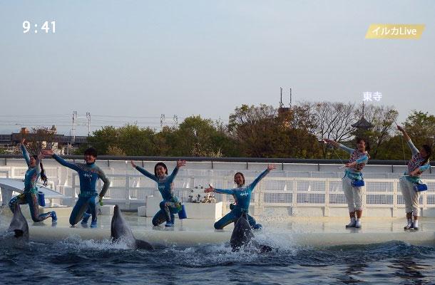 京都水族館のイルカショーと東寺