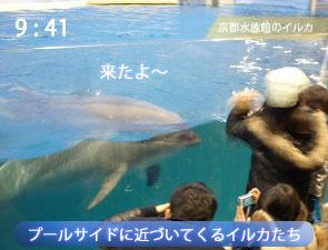 京都水族館のイルカ