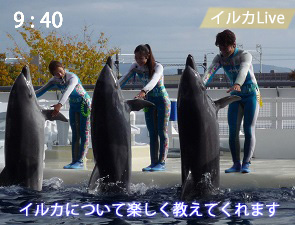 イルカのレクチャー