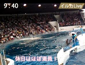 京都水族館のイルカショーの混み具合(休日)