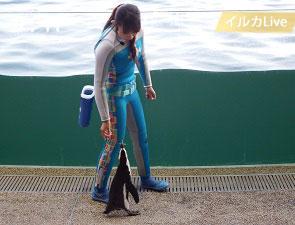 トレーナと歩くケープペンギン