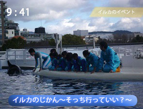 イルカに触れ合える体験プログラムの様子