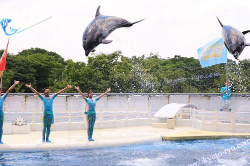 イルカたちの大ジャンプ