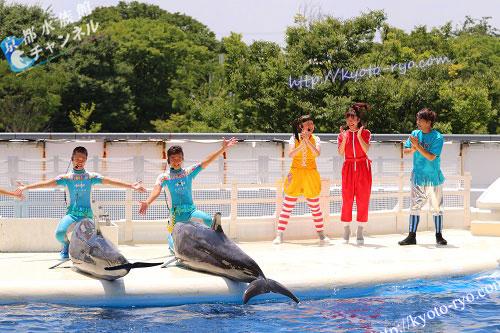 京都水族館のイルカのトレーナー