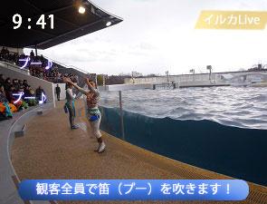 イルカと観客のセッション