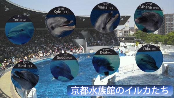 京都水族館のイルカたち
