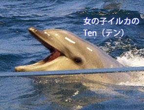イルカの歯