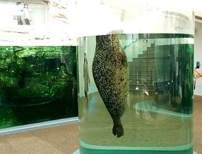 京都水族館のアザラシの水槽