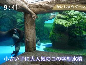 京都水族館のオットセイの水槽