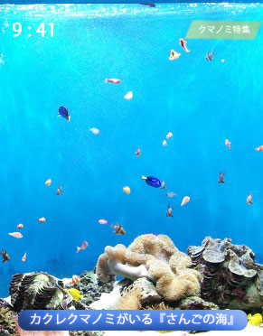 サンゴとカクレクマノミの水槽