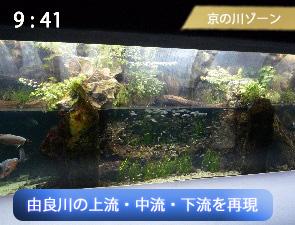 京都の由良川を再現した水槽