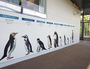 ペンギンゾーンで身長を測る