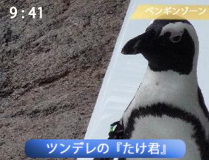 京都水族館のペンギン、たけ君