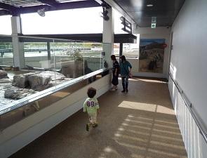 京都水族館のペンギンゾーンの混み具合(平日)