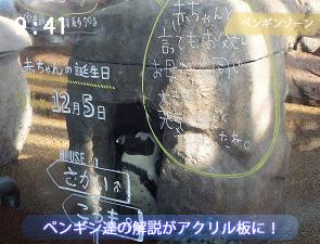 アクリル板に書いてあるペンギンの解説