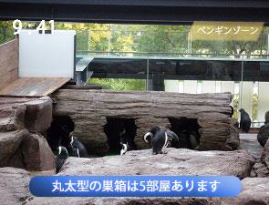 ペンギンゾーンに設置された巣箱