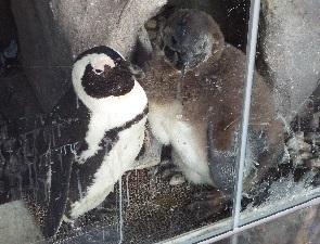 メスのペンギン、ろくじょう
