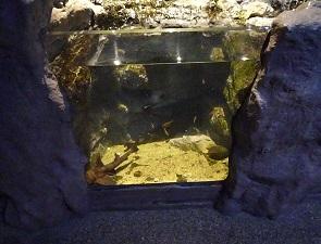 ネコザメの水槽