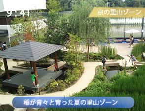 京都水族館の田んぼ