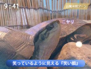 笑い顔のミナミイシガメ